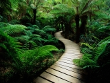 Nature trail Wallpaper
